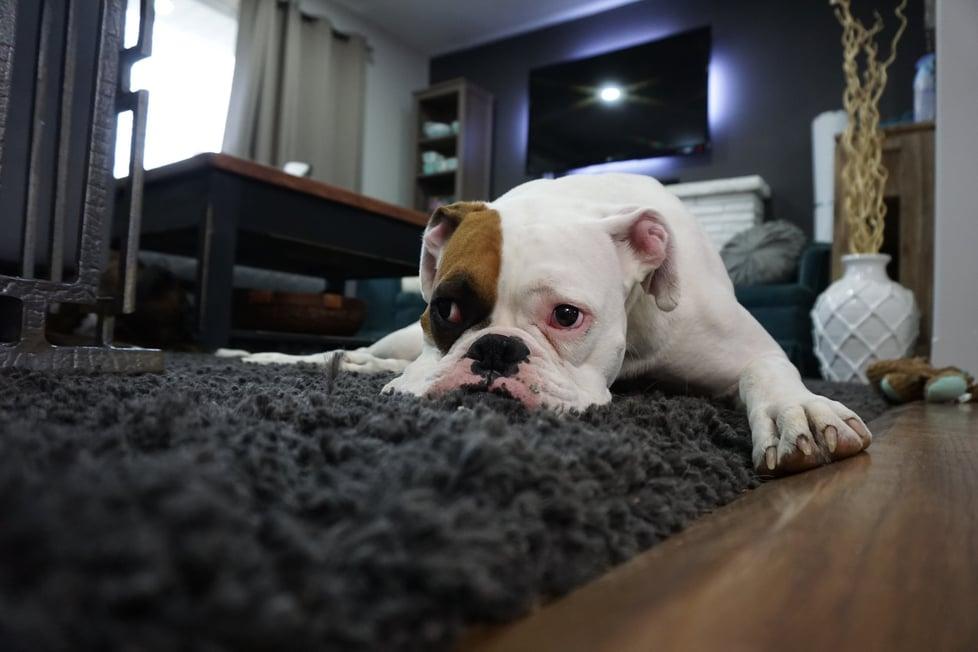 Blog Post_Pet Friendly