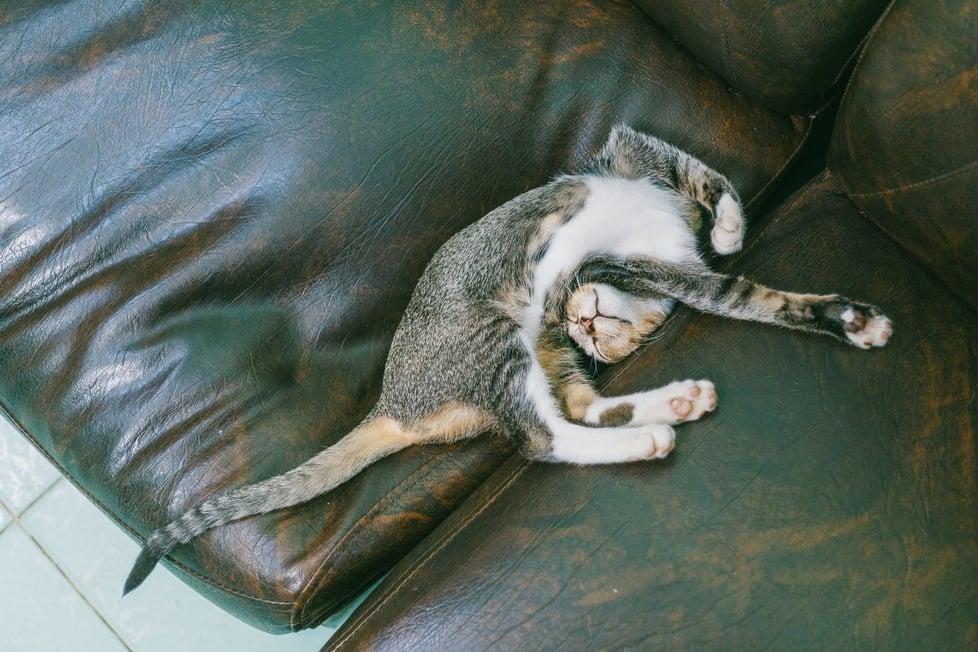Blog Post_Pet Friendly2