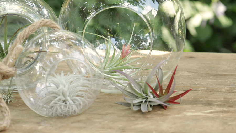 House Plants - Air Plants - Better Homes & Gardens