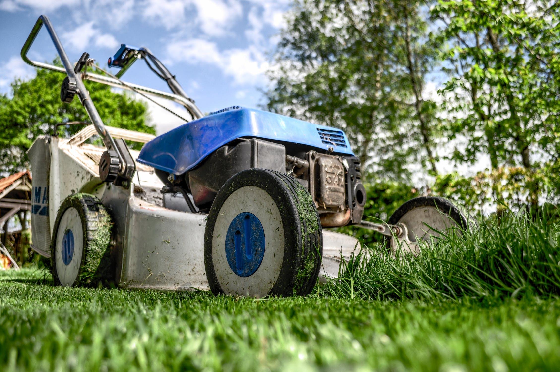 garden-grass-meadow-green-1